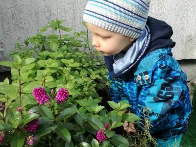 Sprawdzamy jak rosną nasze wysiane i zasadzone roślinki.